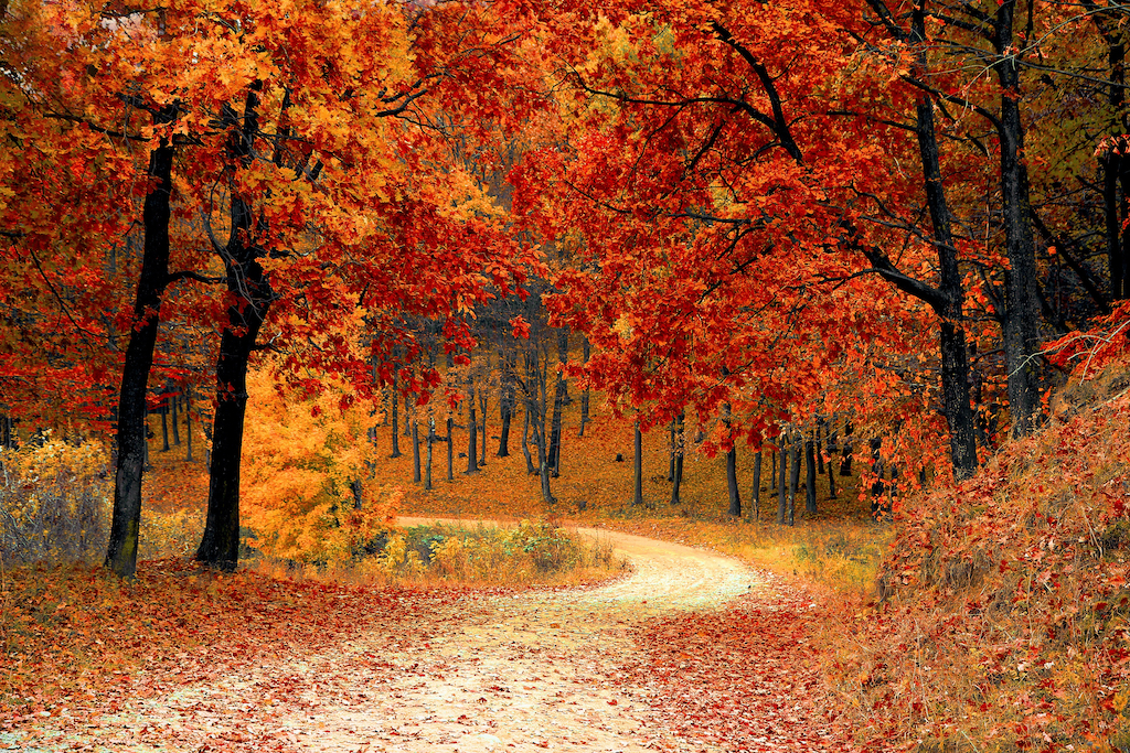Preparing Your Home For Fall in Durham, North Carolina